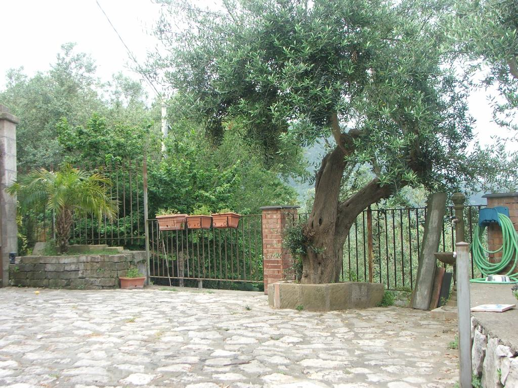 bed and breakfast accommodation: Villetta Surriento